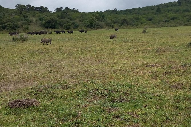 Day Trip to Arusha national Park photo 3