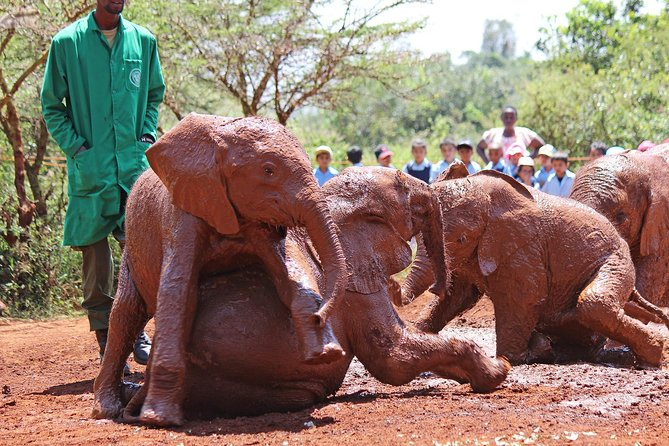 Small Group Budget Tour To Elephant Orphanage and Giraffe Center