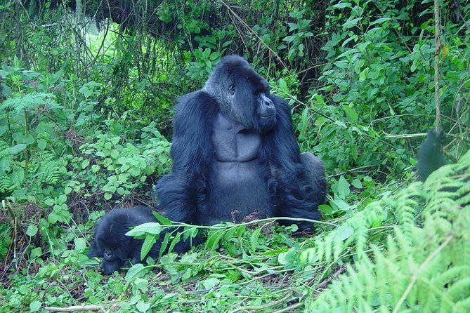 2 Days Gorilla Transfer, Culture Experience and Twin Lakes Visit