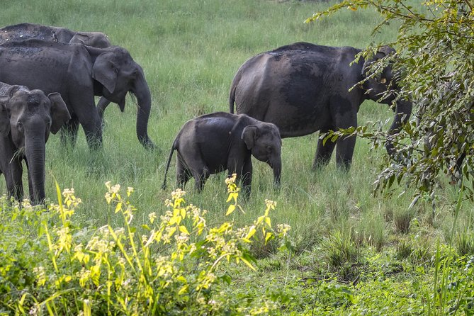 Muthanga Wildlife Safari - A Guided Experience photo 6