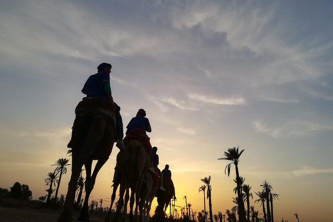 Typical Sunset Camel Ride in the palm Grove of Marrakech