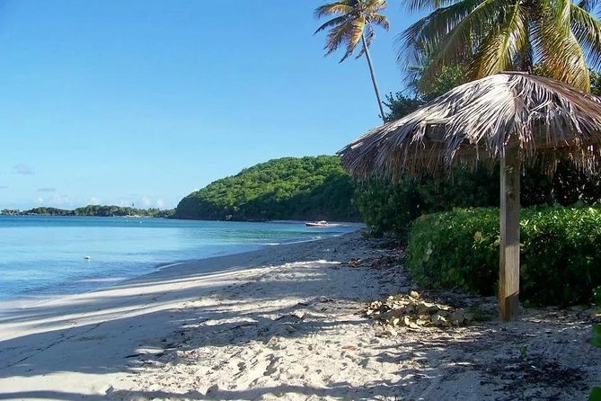 Full Day Palomino Beaches With Lunch