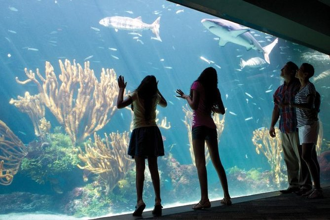 The Bermuda Aquarium and Crystal Caves Experience