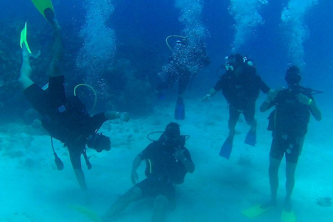 Catalina Island With Scuba Diving - Amazing Full Day Tour Activity photo 7