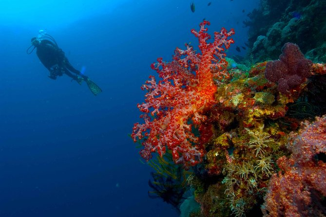 Catalina Island With Scuba Diving - Amazing Full Day Tour Activity photo 22