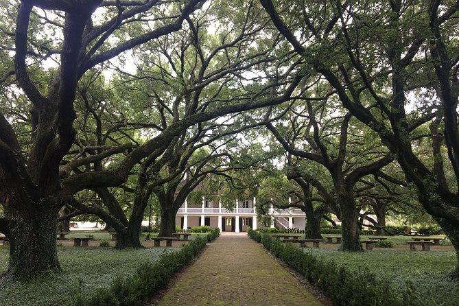 Whitney Plantation and Swamp Tour Combo