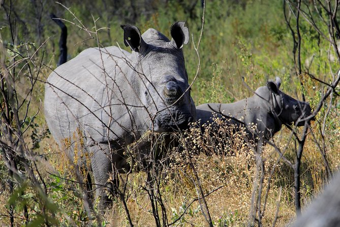 Rhino Encounter Game Drive in Victoria Falls !