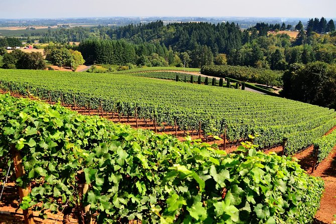 Amador County Wine Tasting Tours (Private Tour 4 Hour)