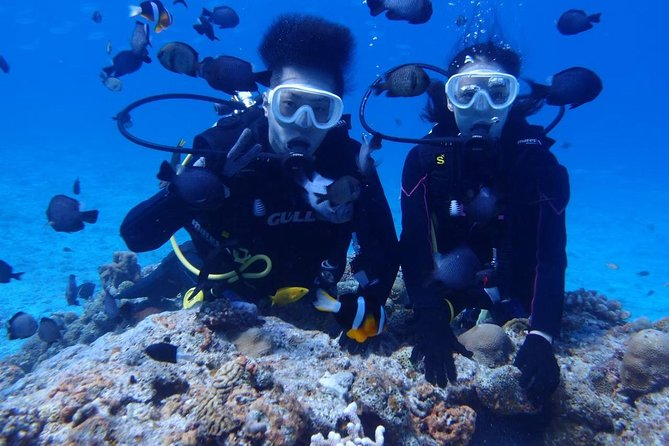 【OKINAWA / Minna Island / Sesoko Island】 Boat Diving for non-Certified Divers (1Dive) for only one group in the afternoon