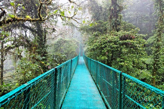 1 day trip getting off the beaten path to Monteverde Rain Forest photo 6