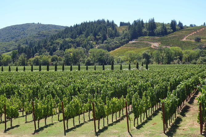 6 Hour Wine Tasting Tours Napa Valley Mercedes-Benz Sprinter Passengers Van