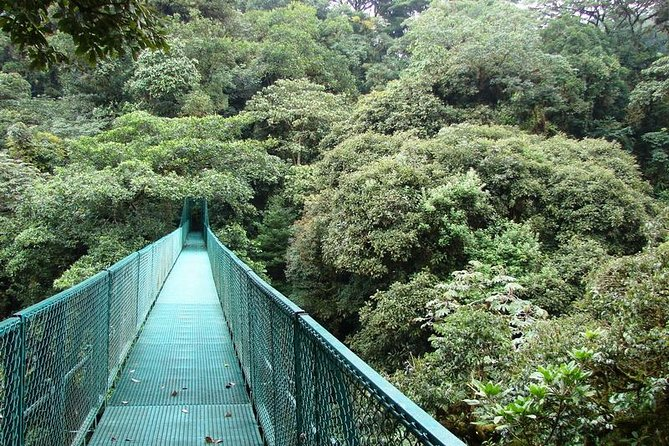 1 day trip getting off the beaten path to Monteverde Rain Forest photo 7