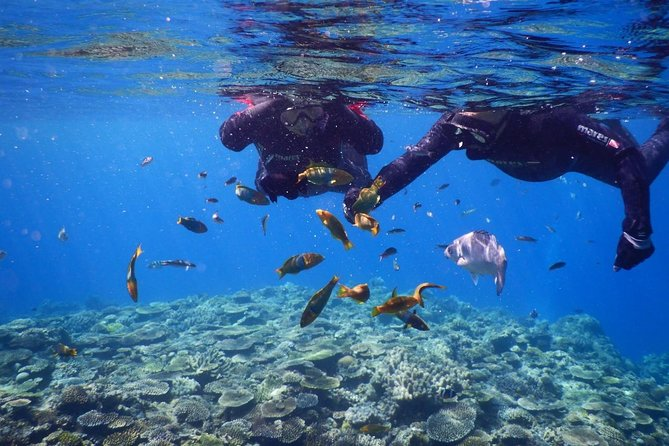 【OKINAWA / Minna Island / Sesoko Island】 Boat Snorkeling Course (1site) for only one group in the afternoon Free photography!!