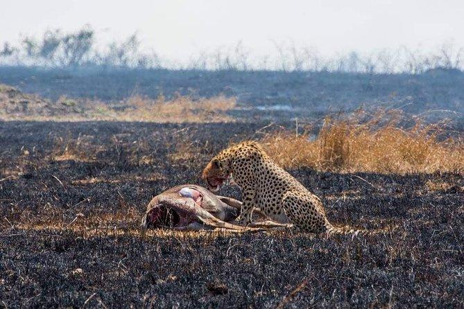 2 Days Special Safari Tarangire National Park & Ngorongoro Crater