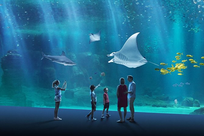 Skip the Line: Entrance Ticket to the NAUSICAA, the biggest aquarium in Europe