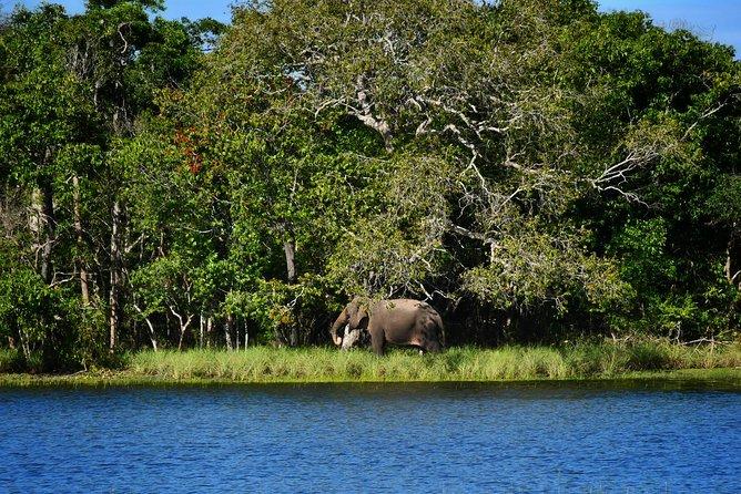 Immersive leopard and sloth bear safari experience – Wilpattu National Park