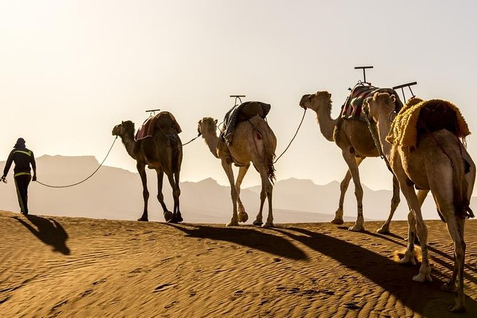 Agadir Desert Escape ( 3 Days / 2 Nights from Agadir ) photo 3