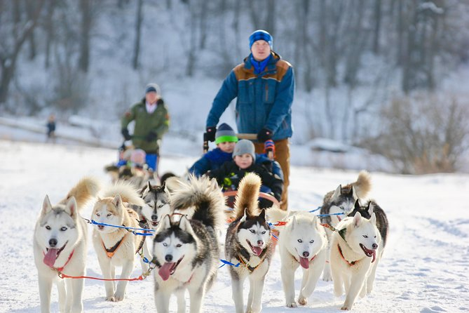 Moscow: Ultimate Dog-sledding Tour in Russian Nature