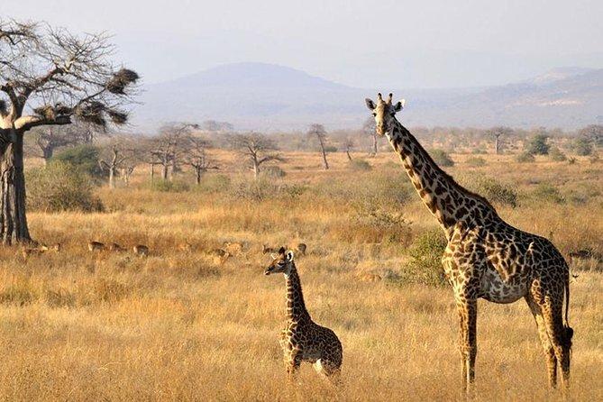 4 Days Fast Safari Tarangire National Park, Serengeti & Ngorongoro Crater