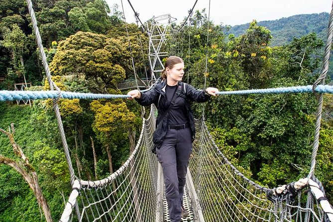 2 days Canopy walk and Chimpanzee trekking photo 1