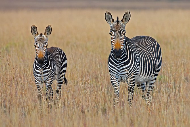 5 Days Malaria - Free Safari Experience in Pilanesberg, South Africa
