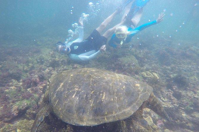 5-Day Diving in Santa Cruz-Galapagos Islands