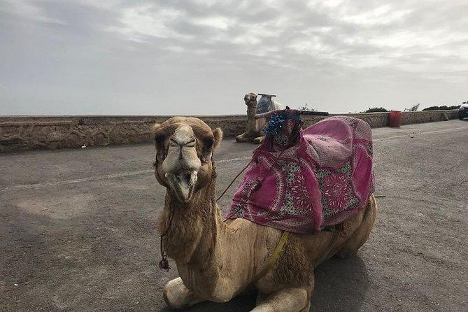 Camel Ride journey in Agadir