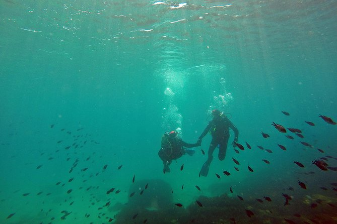 Baptism of diving in the Natural Park of the Strait