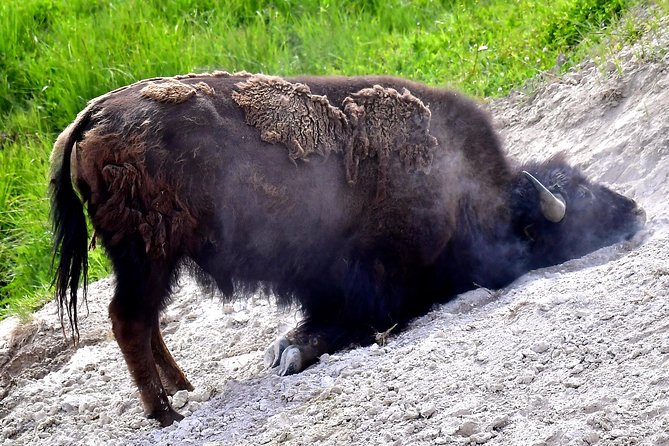 PRIVATE TOUR: The Best of Yellowstone National Park. Picnic lunch included! photo 8