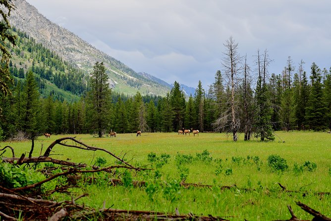 PRIVATE TOUR: The Best of Yellowstone National Park. Picnic lunch included! photo 3