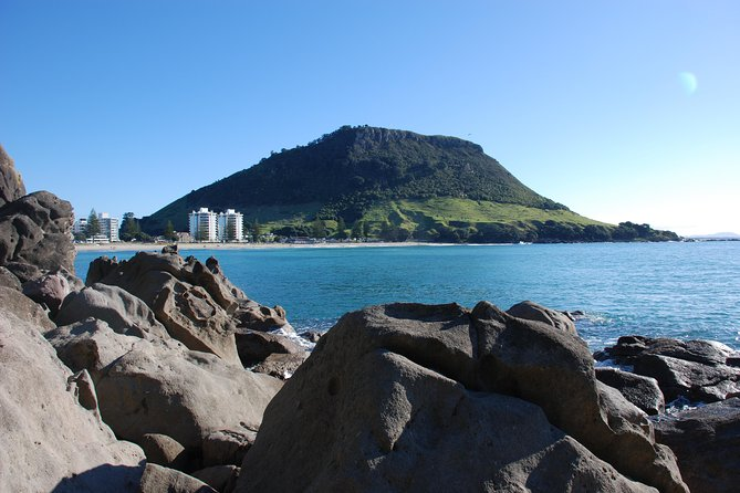 Tauranga Highlights Shore Excursion Private Tour up to 8 passengers