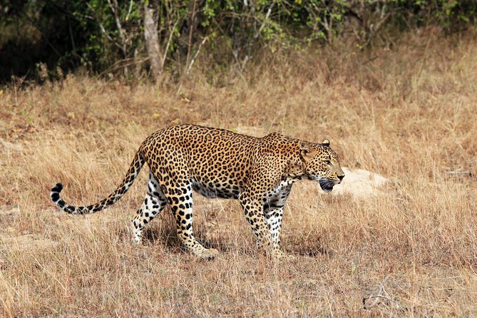 Leopard Safari Tour in Yala National Park photo 12