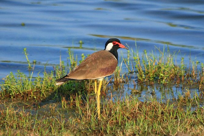 Bird Watching Tour in Muthurajawela Wetland from Colombo Harbour