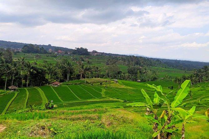 Explore Jatiluwih Unesco Heritage