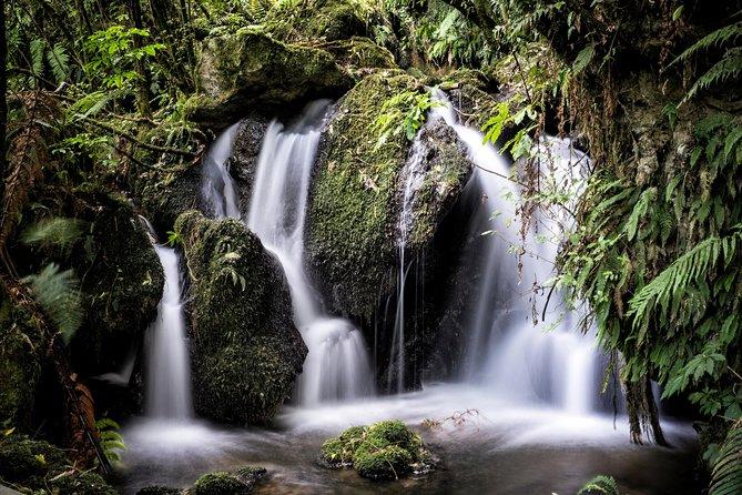 Hobbiton Movie Set Tour & Rotorua Twin Village Experience