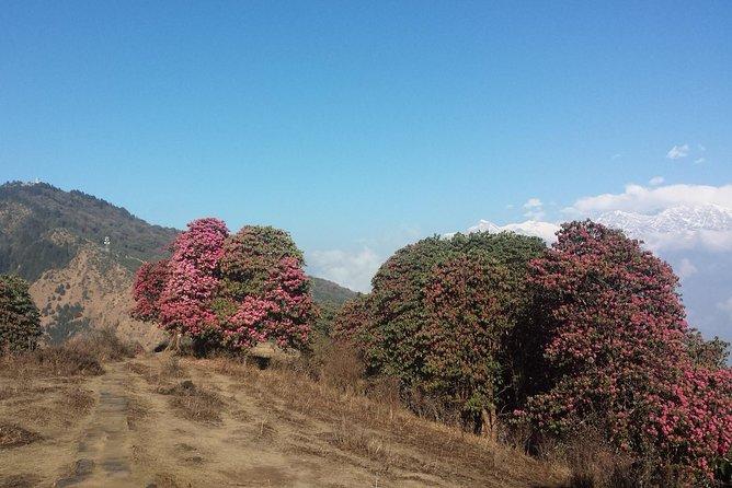 Ghorepani Poonhill Mountain Villages Trekking from Pokhara