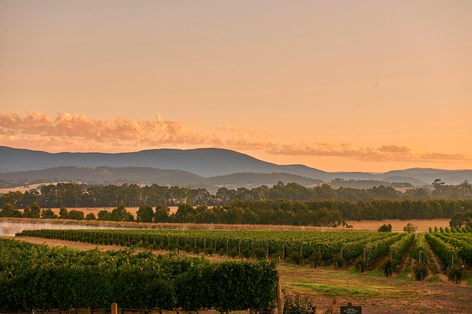 Yarra Valley Wine Masterclass - Up to 6