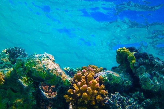 Marsa Alam Tours To Sharm El Luli Snorkeling Tours