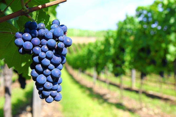Excursão privada de um dia à vinícola Mendoza com Airfaire saindo de Buenos Aires