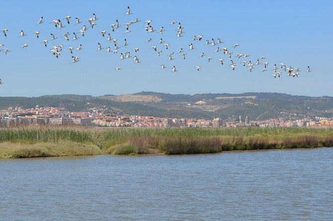 Tagus Estuary Natural Reserve Tour