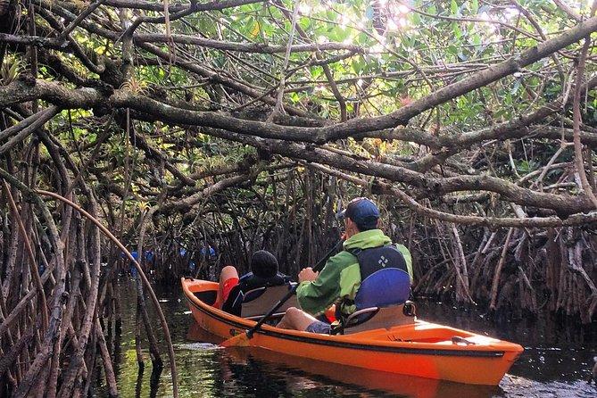 Everglades Kayak Safari Adventure Through Mangrove Tunnels