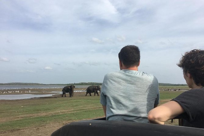 Private Jeep Safari at Minneriya National Park photo 11