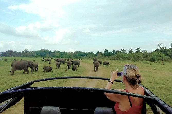 Private Jeep Safari at Minneriya National Park photo 3