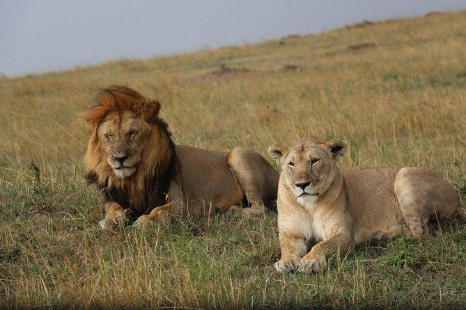 3 days 2 nights masai mara private safari (midrange)