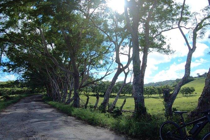 Riding through St Thomas countryside.