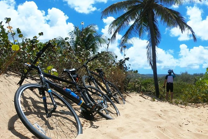 Island Bike Tour: on regular or electric bicycles.