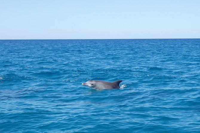 Noosa Wild Dolphin Safari