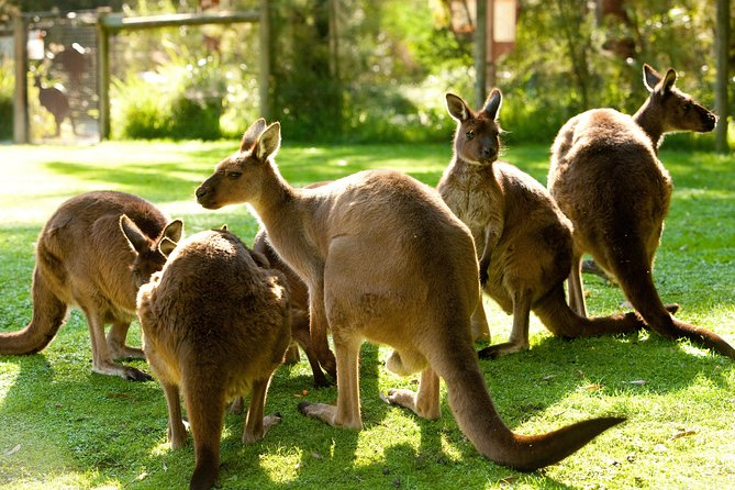 Yarra Valley Wildlife & Wine Day Tour from Melbourne with Healesville Sanctuary photo 4