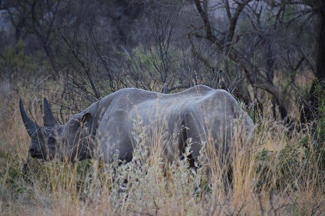 Pilanesberg National Park Full Day Closed Vehicle Tour