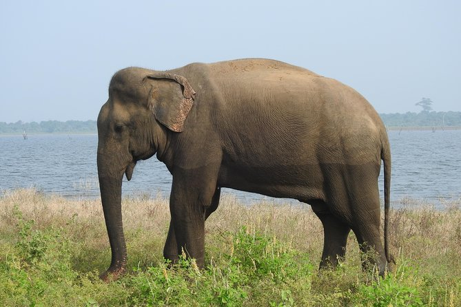 Two Day Yala National Park Tour